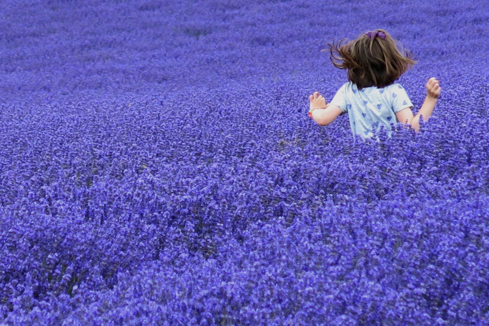 Lavender increases quality of sleep