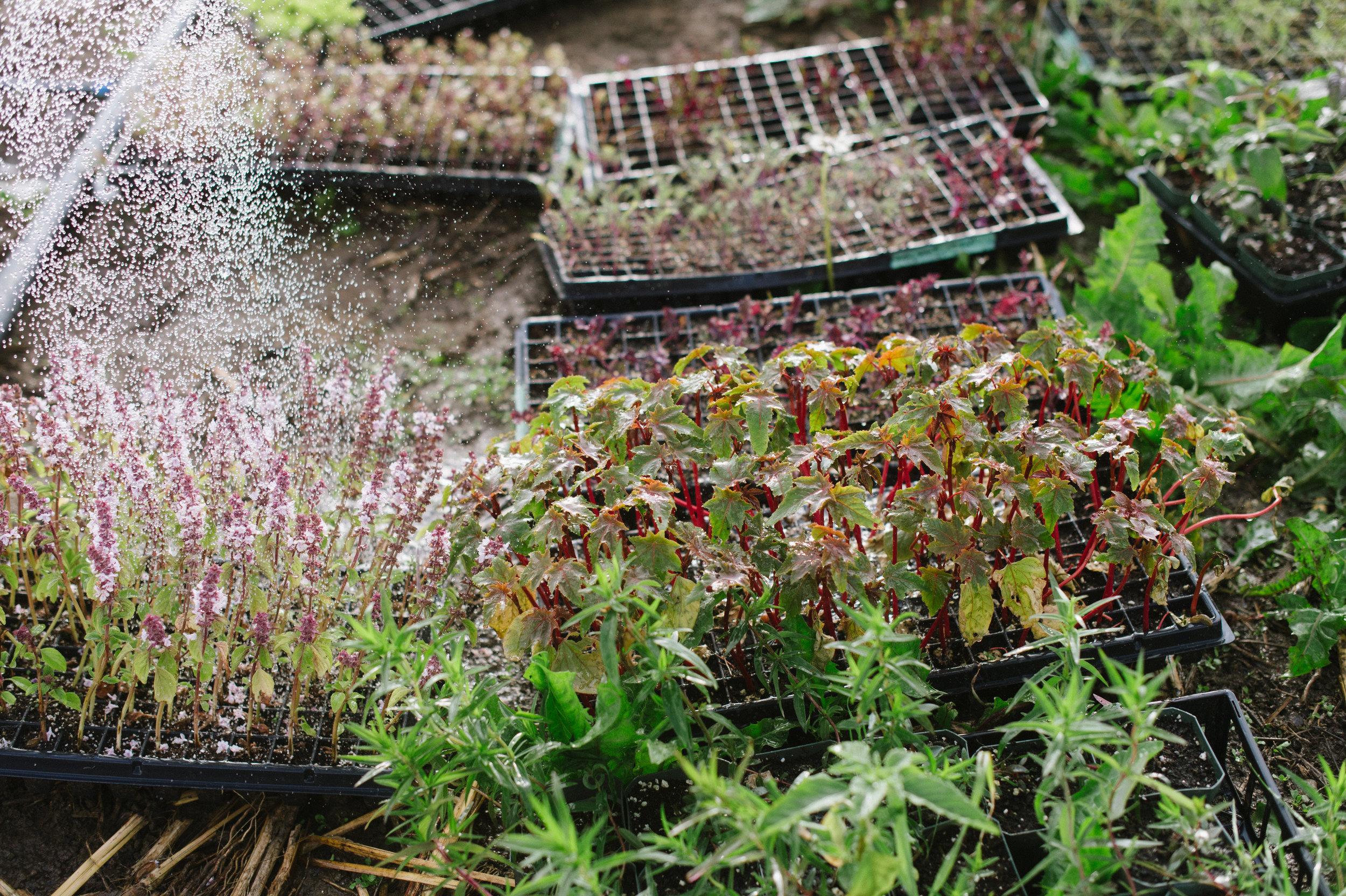 seedlings, flower farm