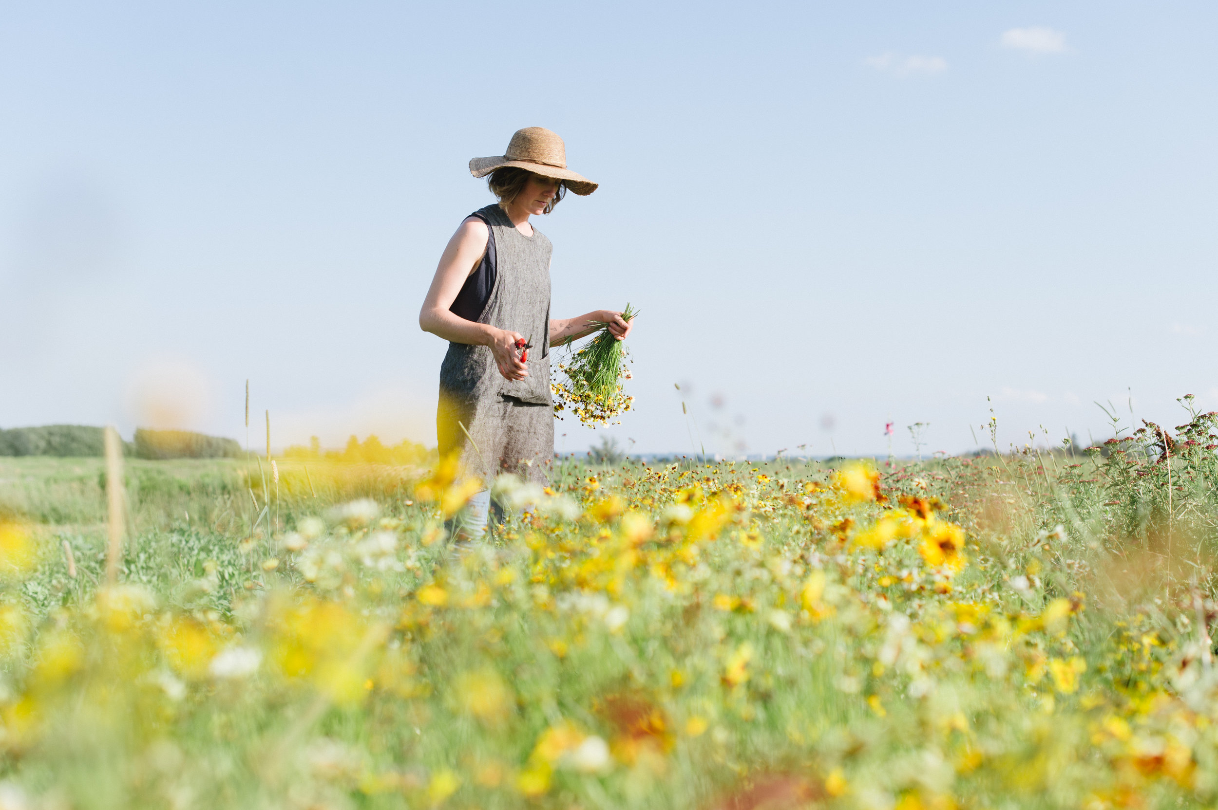 flower farmer, coreopsis
