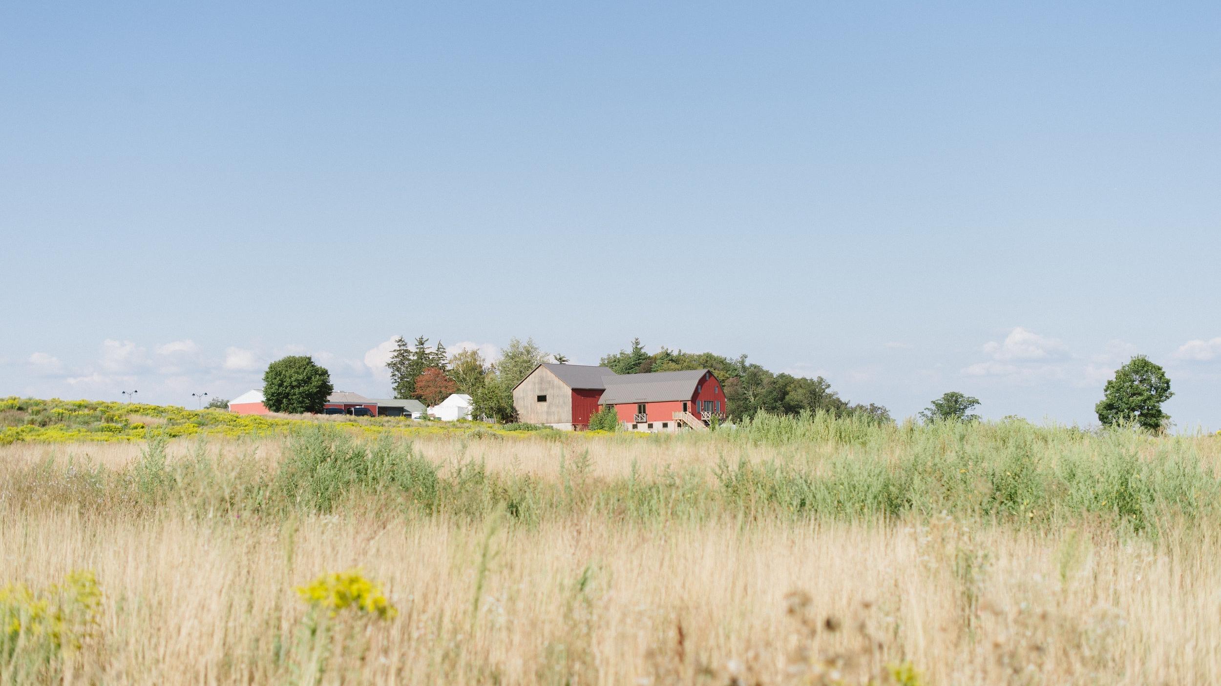 farm, flower farm, Ontario