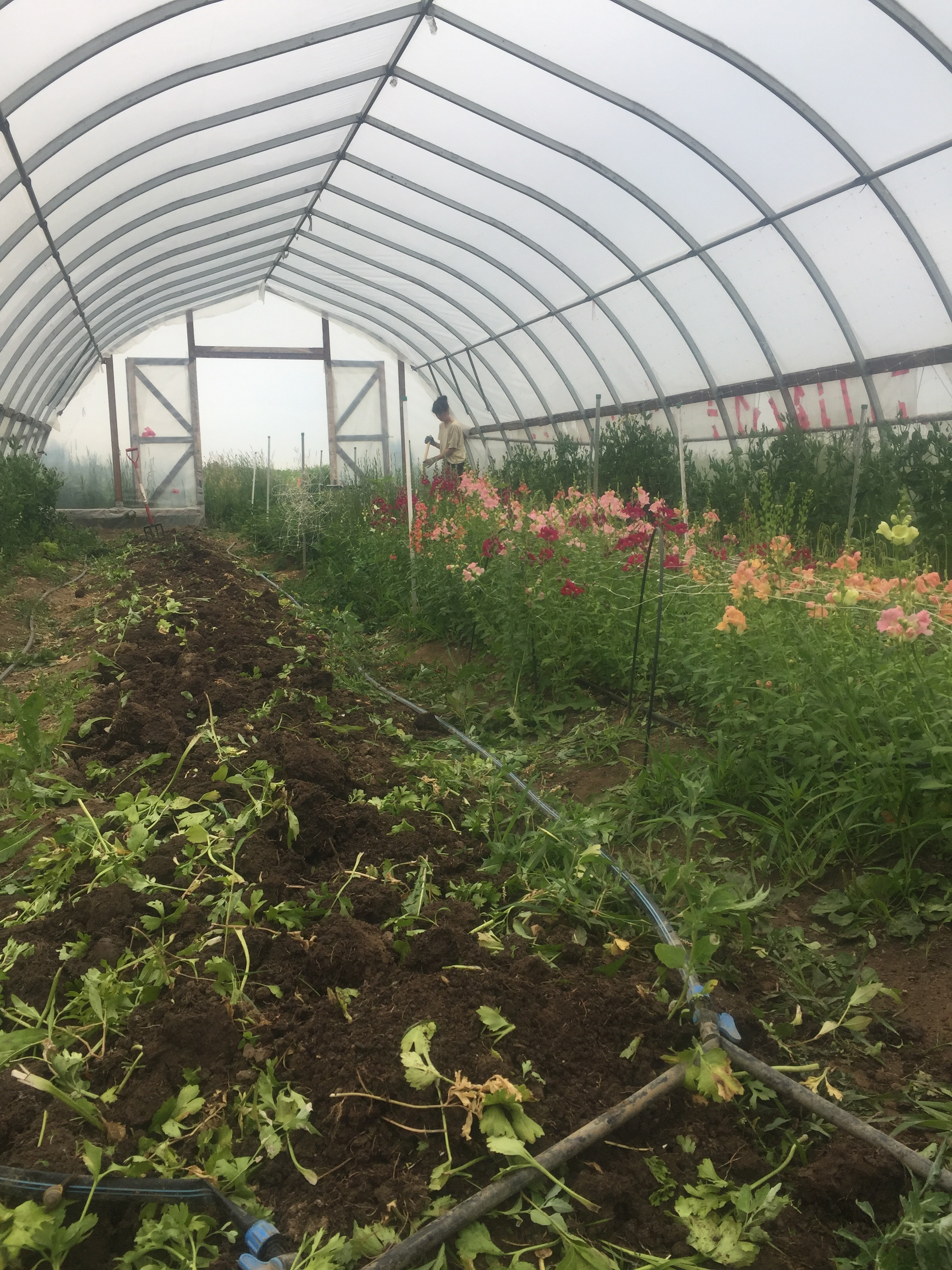 organic ecological flower farm ontario