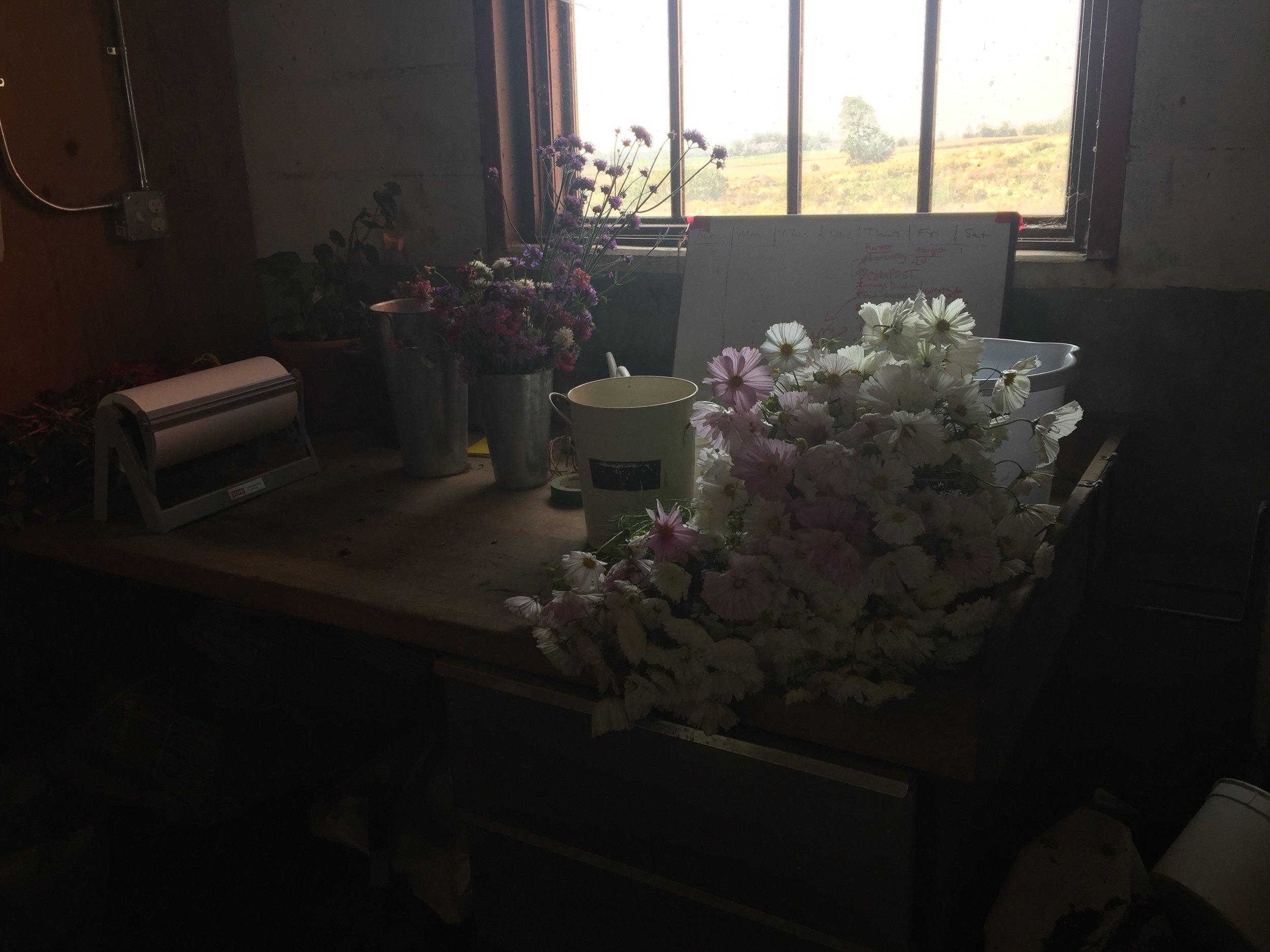 flower farmer, Ontario