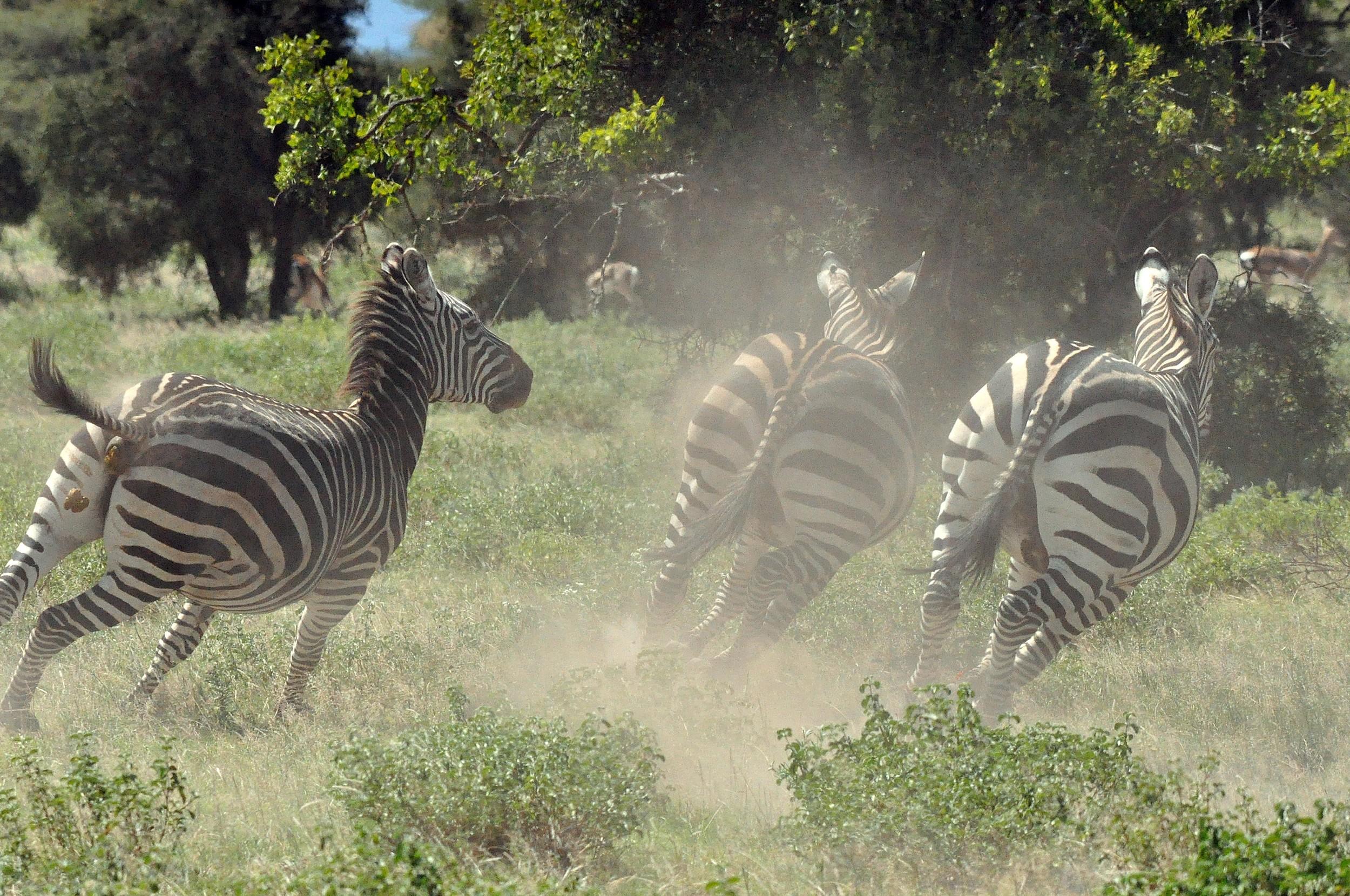 Überwachung und Schutz der Wildtiere