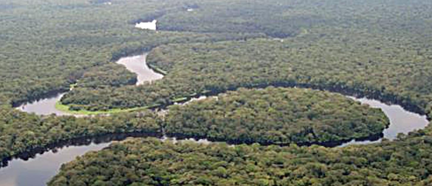 Salonga-Nationalpark: Grösste Tropenwaldfläche der Welt                 © Foto: Moyogo