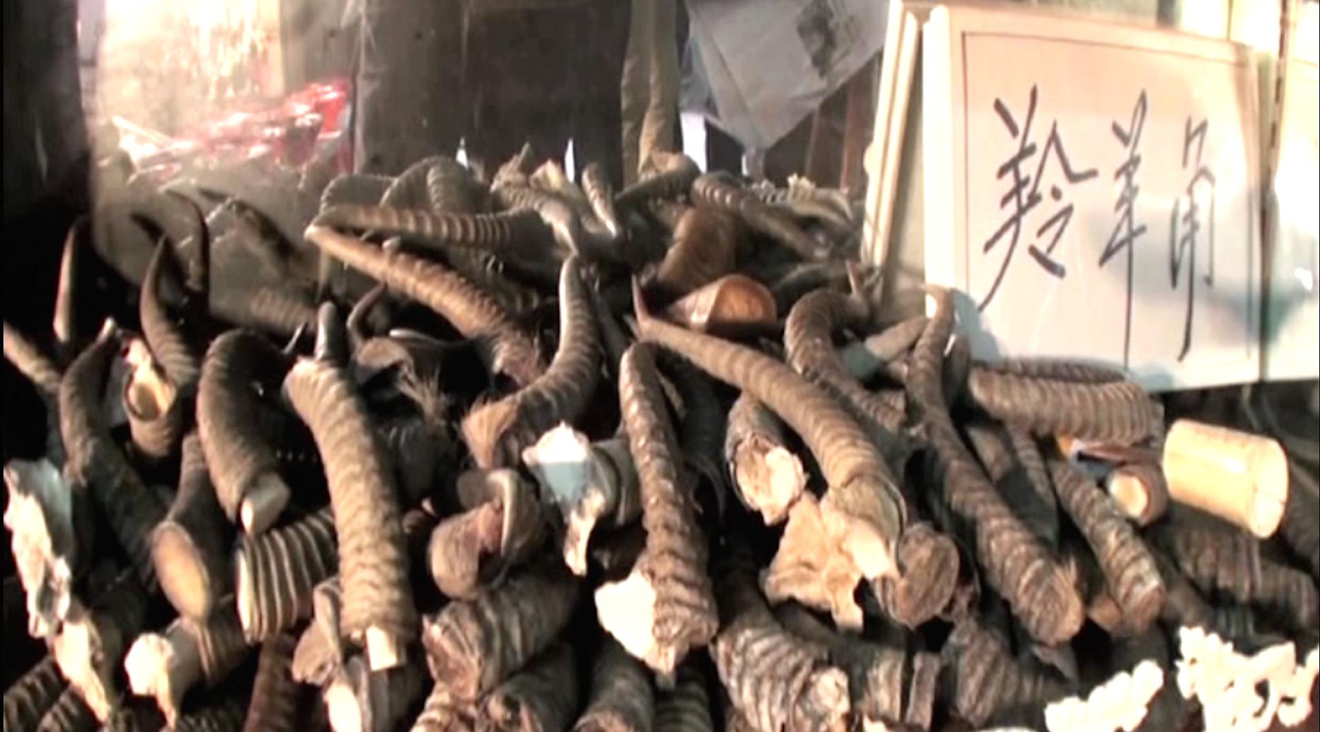 Antilopenhörner zuhauf: Wird zerhackt oder zerrieben als Rhino-Nasenhorn verkauft