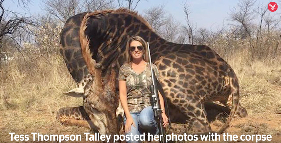 Selfie mit erlegter Giraffe:  Jägerin Tess Talley |  Foto Social Media - «The Interdependent»