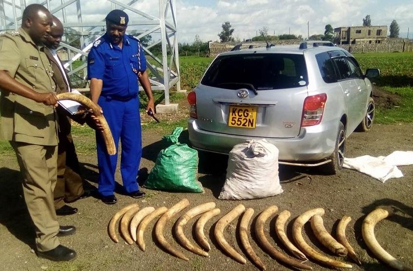 Beschlagnahmt: Elfenbein in Kenia |  © Foto by Interpol / WZO