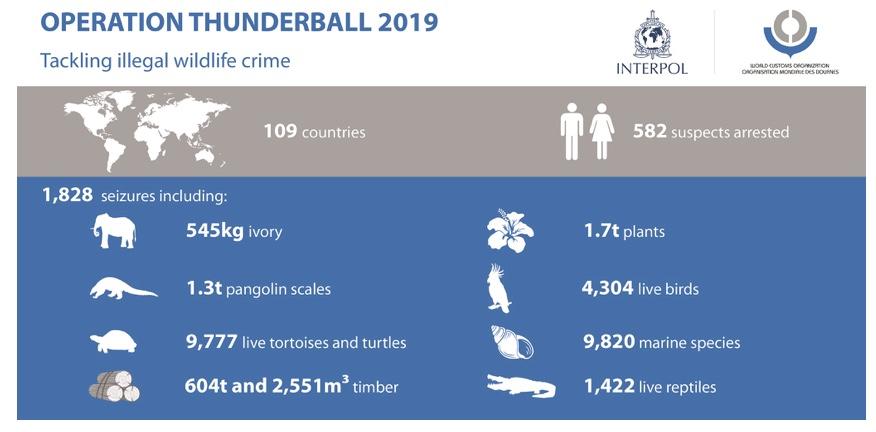 Statistik des Grauens: Beschlagnahmungen|  © Grafik by Interpol / WZO