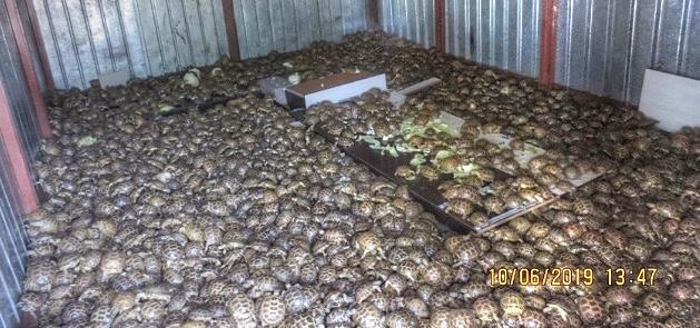 Beschlagnahmt: Container mit 4'100 Vierzehenschildkröten in Russland |  © Foto by Interpol / WZO