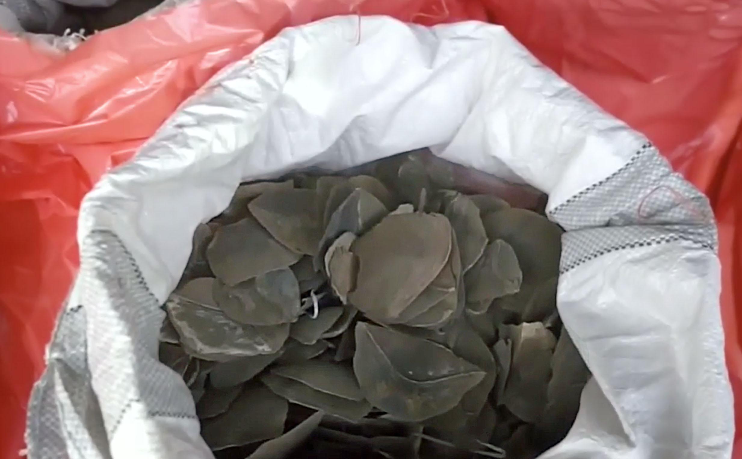 Beschlagnahmt: Nahansicht Pangolin-Schuppen in Singapur |  © Foto Zoll Singapur
