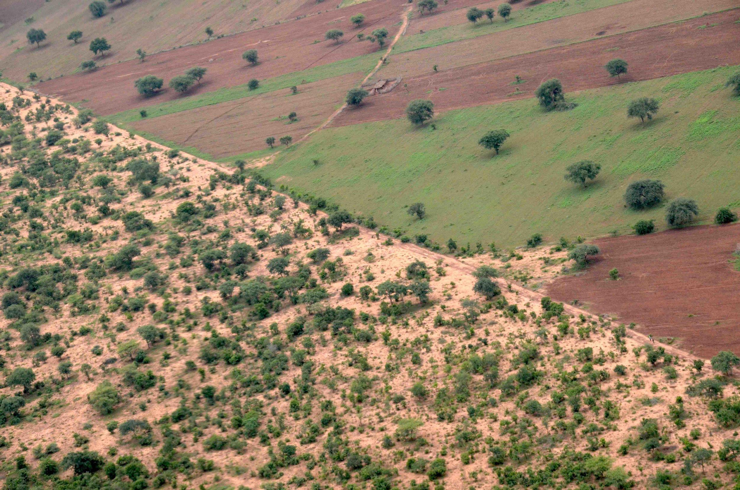 Die kritische Grenze:  Unten der Nationalpark, oben kultiviertes Land |  © Foto RS