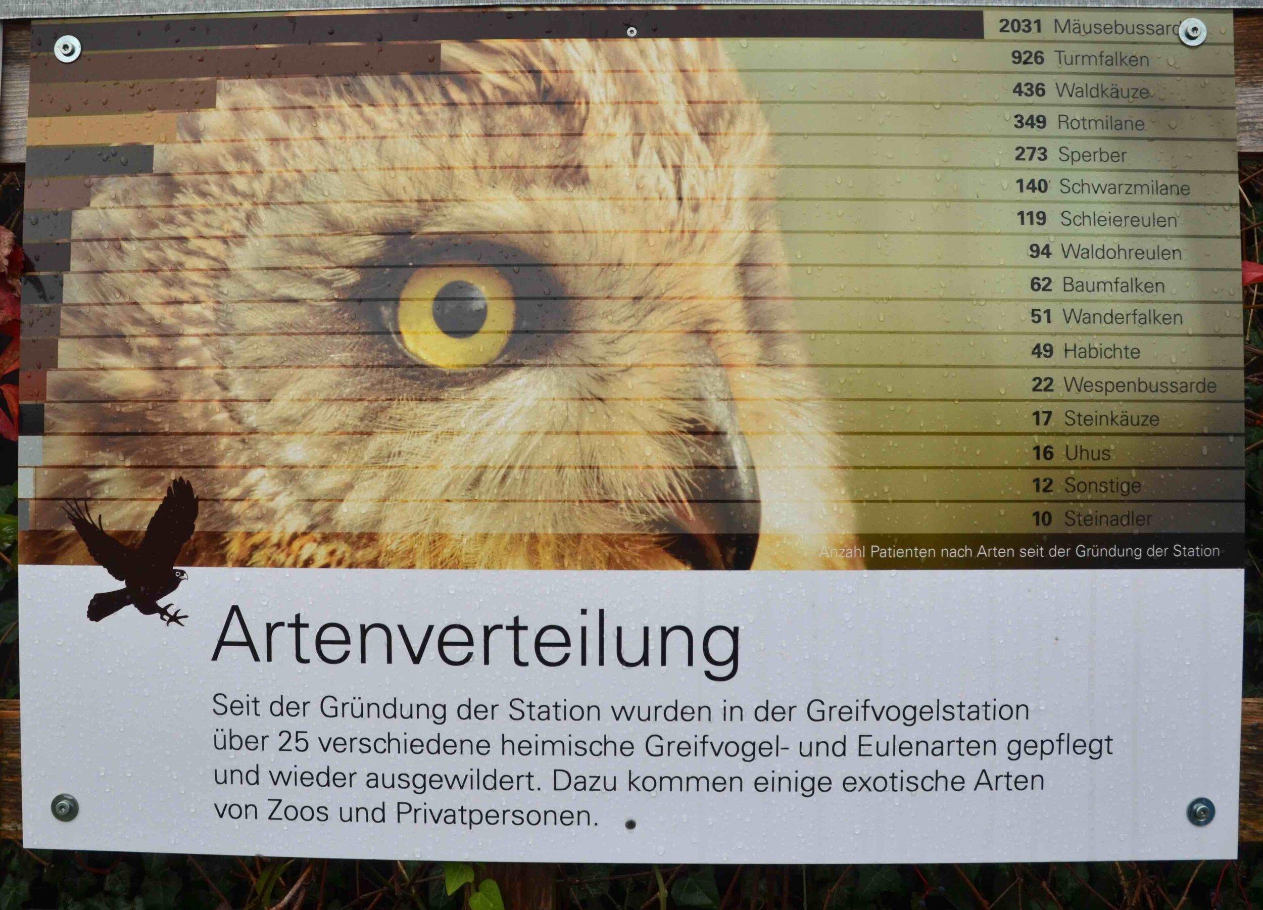 Tafel Arten_1185 WEB©RSuter.jpg