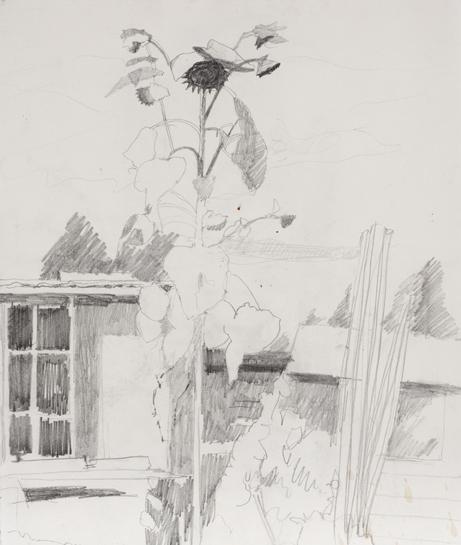 Sunflower drawing.jpg