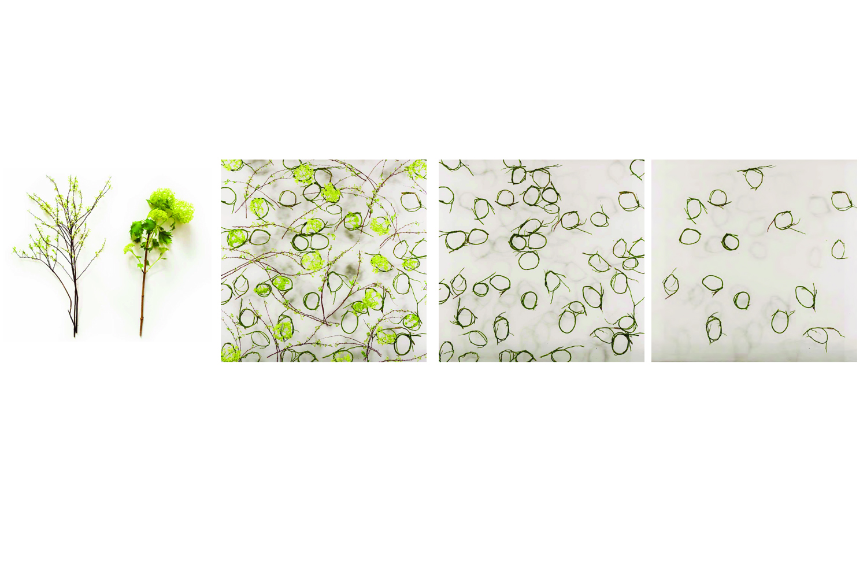pattern 4 .jpg