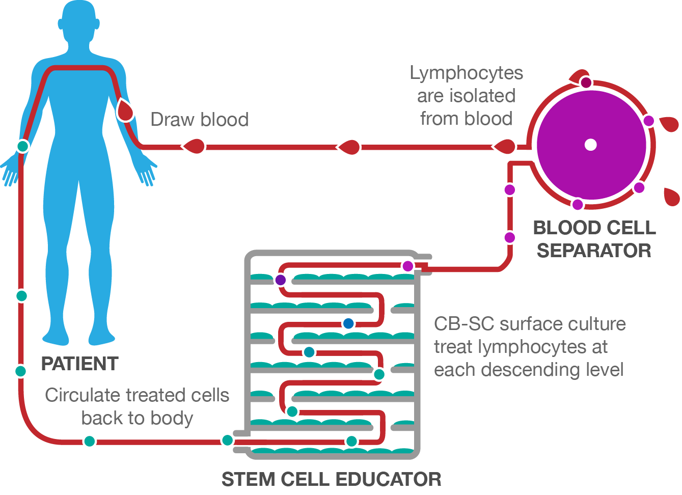stem cell educator therapy process.png