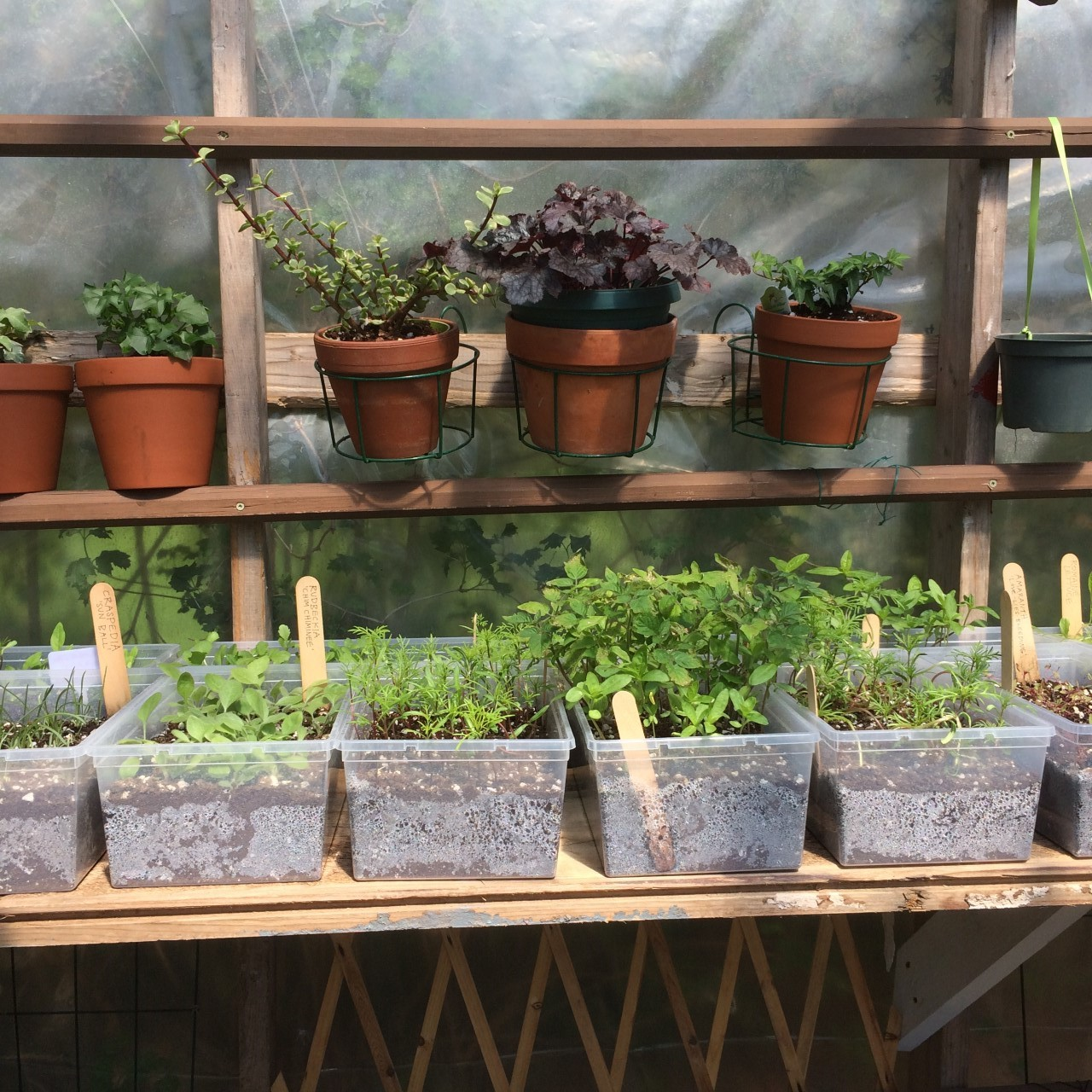 pottedplants.jpg