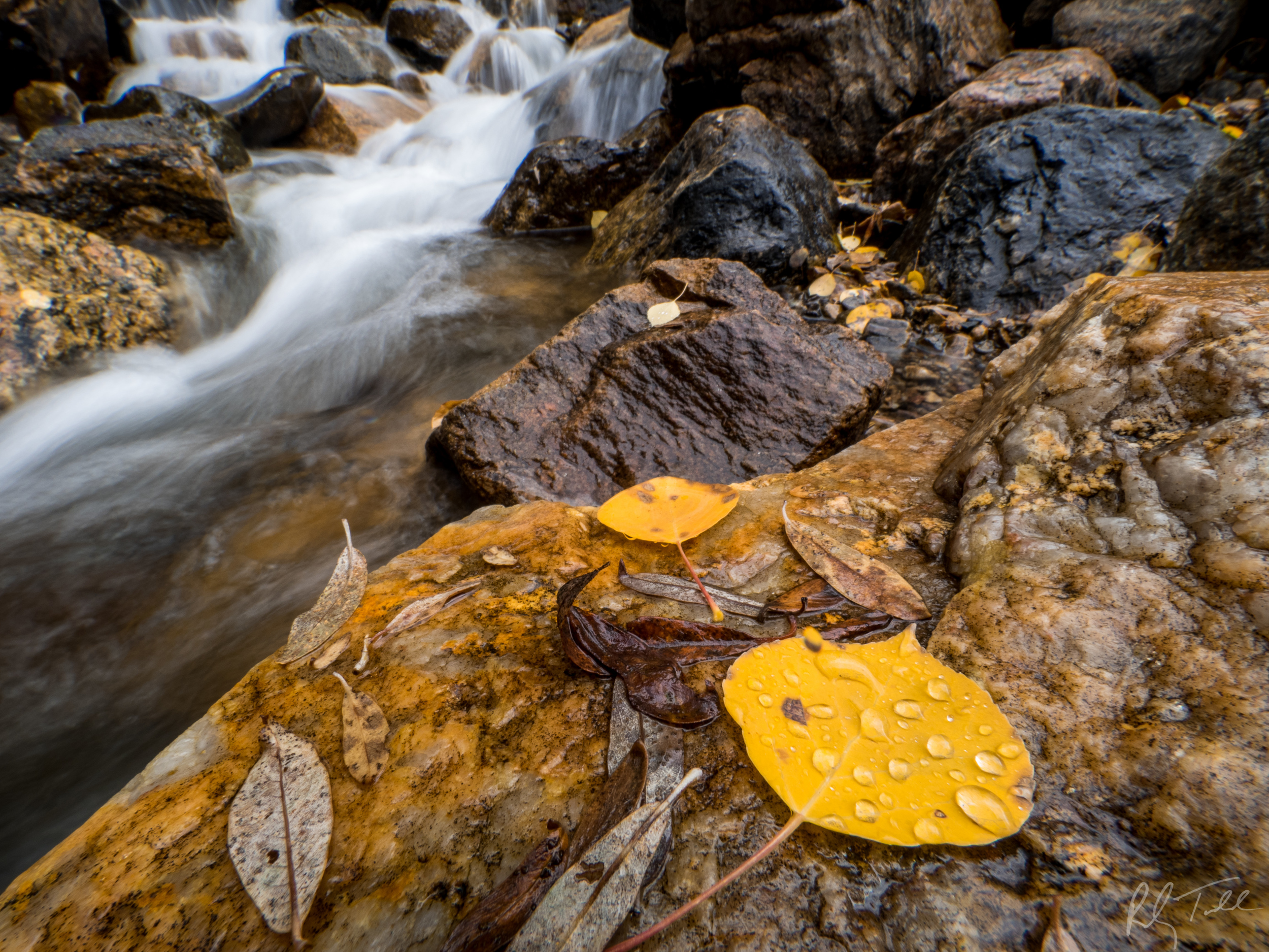 Fall Colors-Guanella Pass-3.jpg