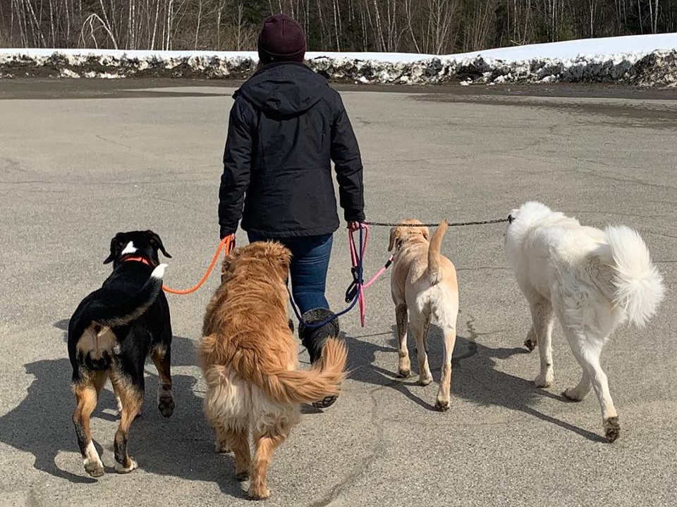 reneeanddogs2019.jpg