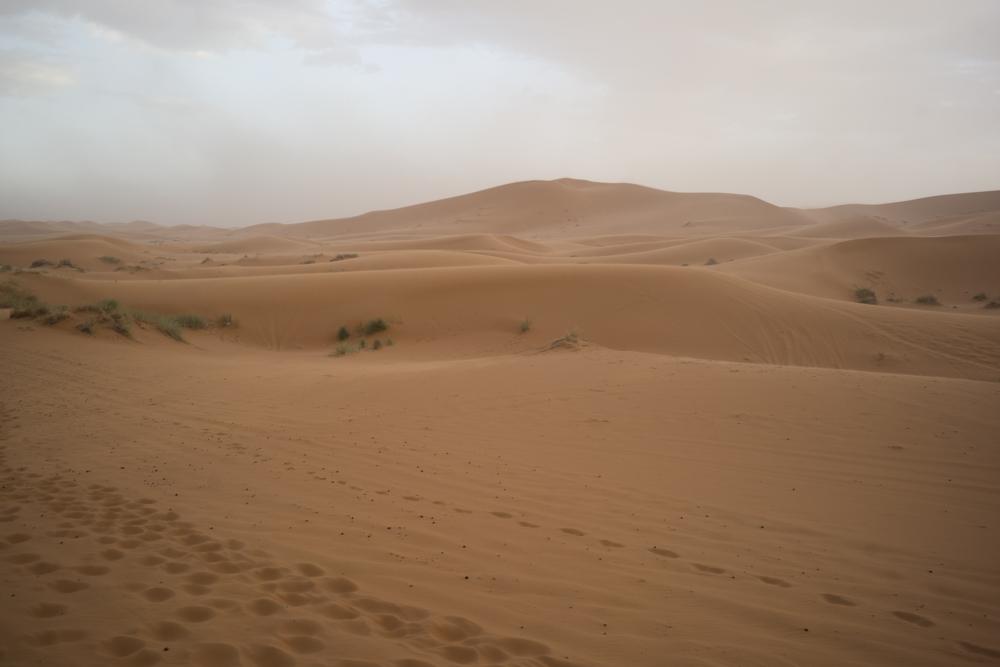 - Sahara Desert