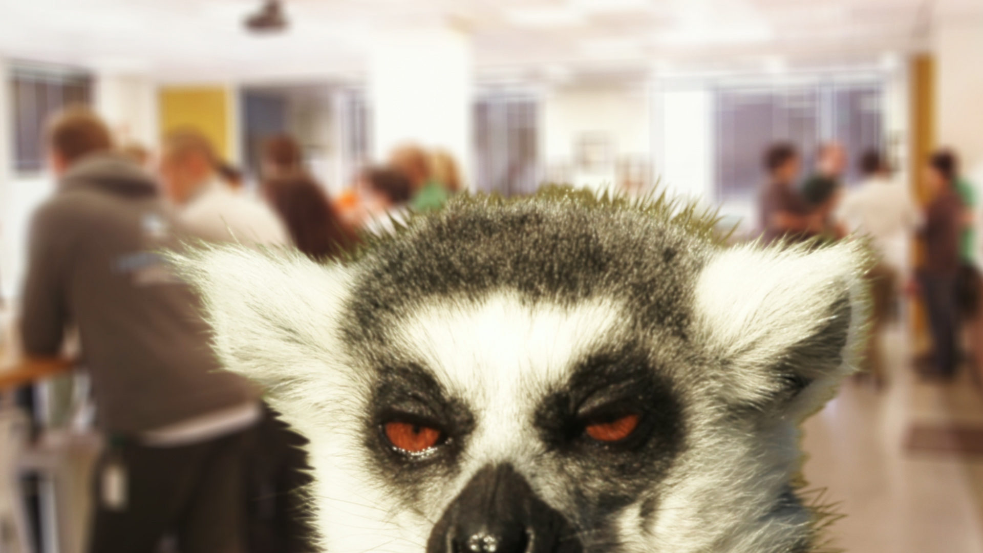 Femto_PR_still_MF-lemur.jpg