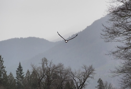 Eyes on Eagles: Featuring Your Bald Eagle Photos — The