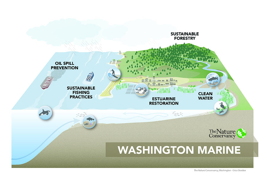 The land-to-sea landscape is home to species such as oysters, whales and salmon. It is also where shipping, fishing and recreation occur and where communities live. Highlighted in the illustration are The Nature Conservancy's highest priorities for conserving the marine environment: oil spill prevention, sustainable fishing practices, estuarine restoration, clean water and sustainable forestry. The final design shows how The Nature Conservancy is working to protect our oceans from land to sea in order to sustain diverse marine habitats, abundant fisheries and coastal economies and cultures.
