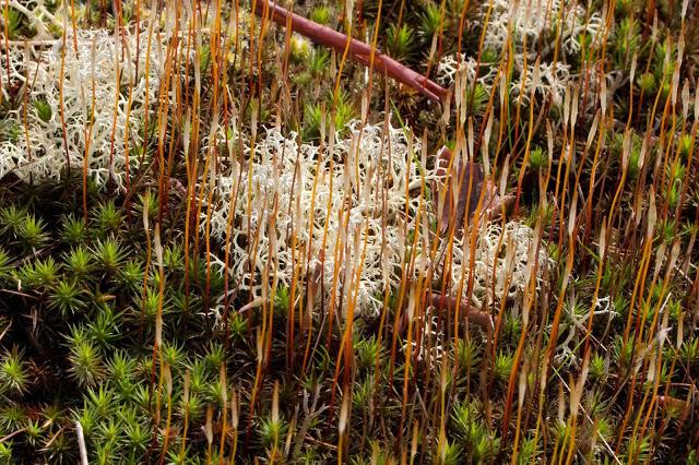 mosses etc-2.jpg