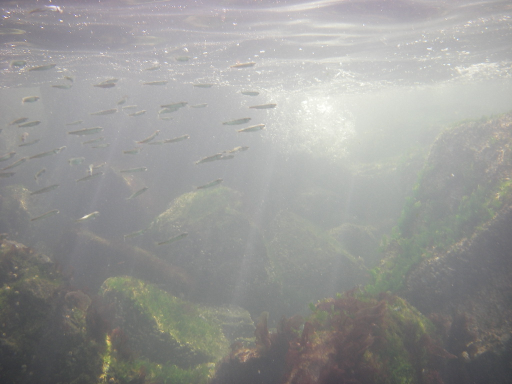 chum underwater.JPG