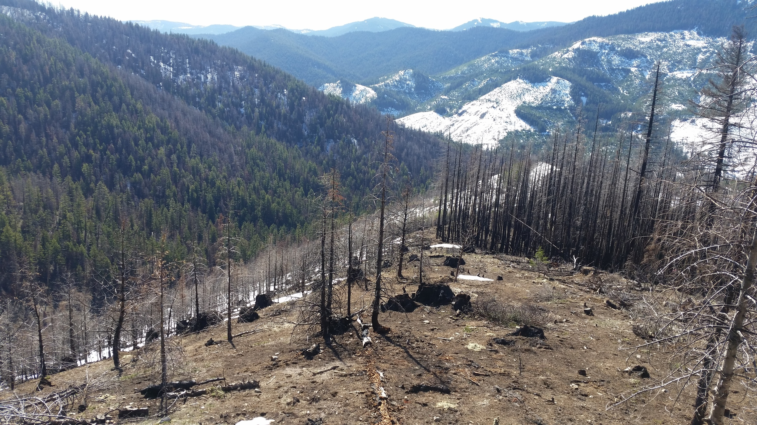 S Cle Elum Ridge_area burned in 2014 (2).jpg