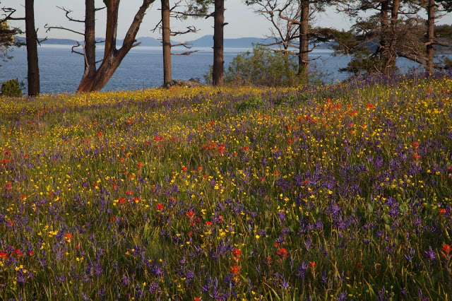 hh meadow.jpg