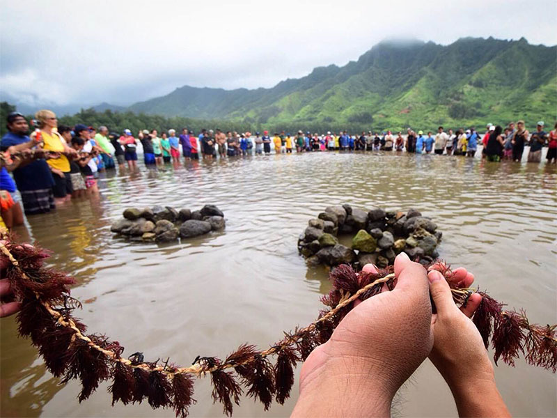 The Emerald Edge delegation joins Indigenous people and grassroots organizations from more than 30 countries in blessing the fish pond  lei limu , seaweed woven into dried grass.