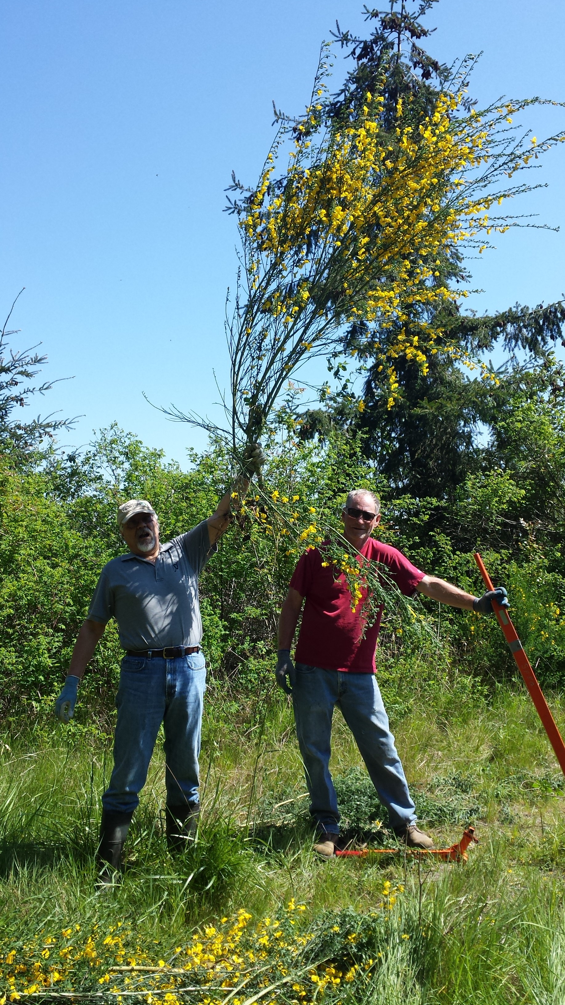 Al (left) holding an exceptionally tenacious scotch broom plant they conquered at our Livingston Bay preserve in 2015. Photo by Joelene Boyd