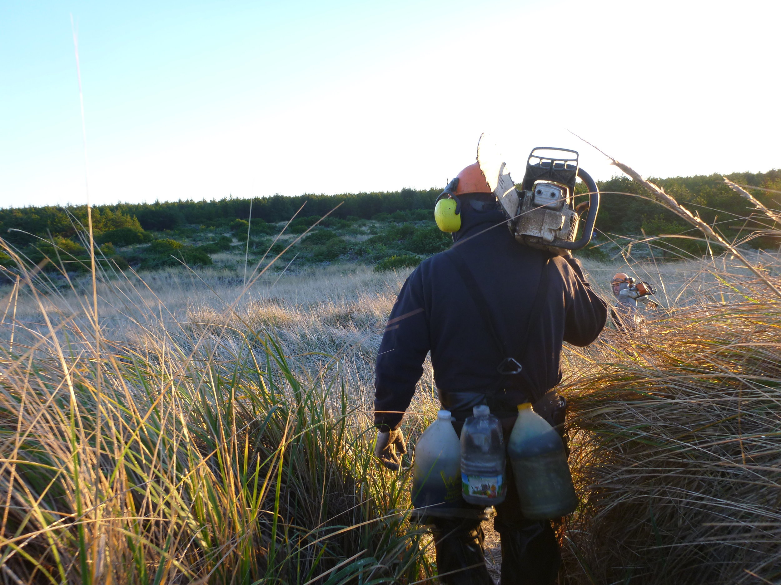 The crew heads into the dunes at Leadbetter Point in the Willapa National Wildlife Refuge.