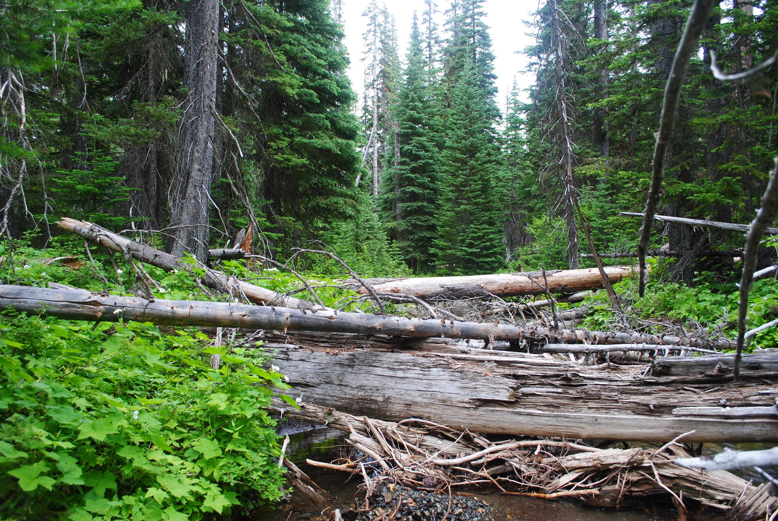 A log jam in the Central Cascades. Photo ©Zoe van Duivenbode / TNC