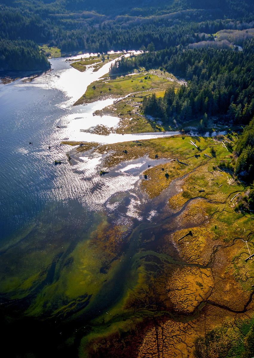 An aerial view of Clayoquot Sound, on the west coast of Vancouver Island. Photo credit: © Bryan Evans