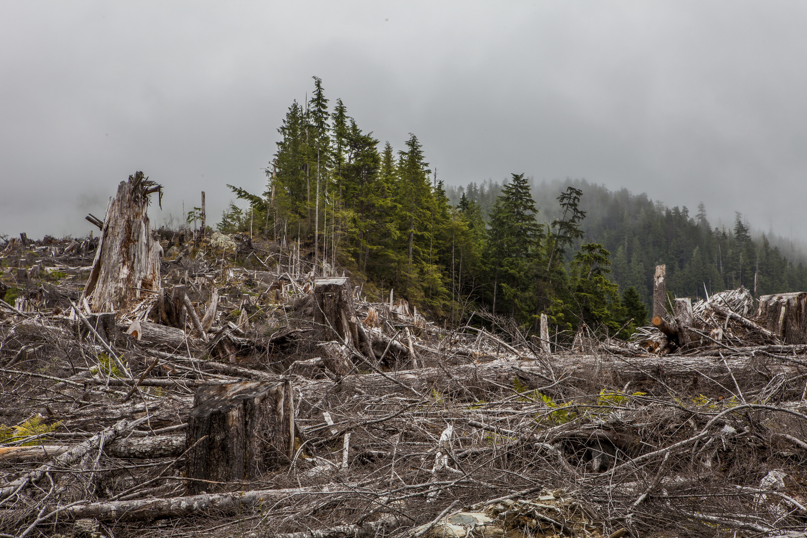 Clear-cutting of Tongass National Forest at Natzuhini River on Prince of Wales Island, Alaska, in 2013. Photo by Erika Nortemann/TNC
