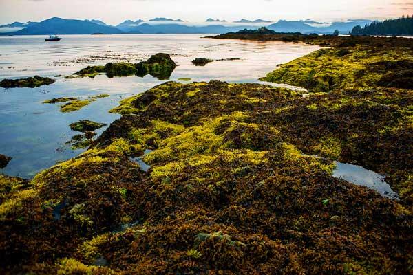 Gwaii Haanas National Park Reserve, National Marine Conservation Area Reserve and Haida Heritage Site, Haida Gwaii. Image credit: N. Osborne/Parks Canada.
