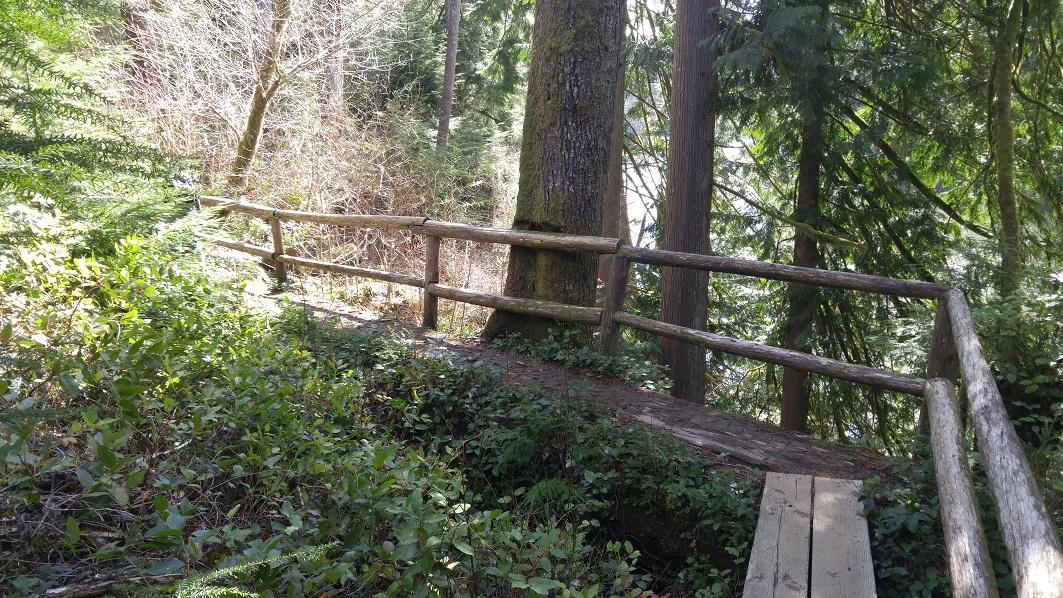 A long-fallen tree provides a helpful walkway and bridge along the park's trails. Photo by Garrett Dalan.