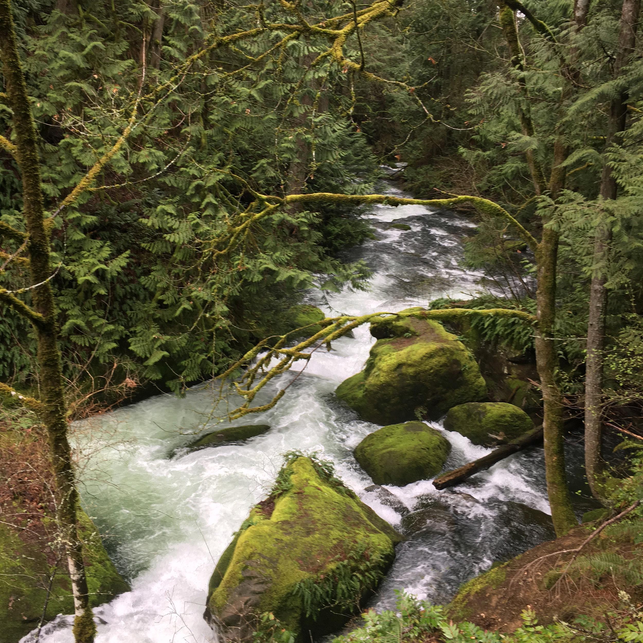Moss clings to rocks and trees alike in this riparian habitat along Whatcom Creek.