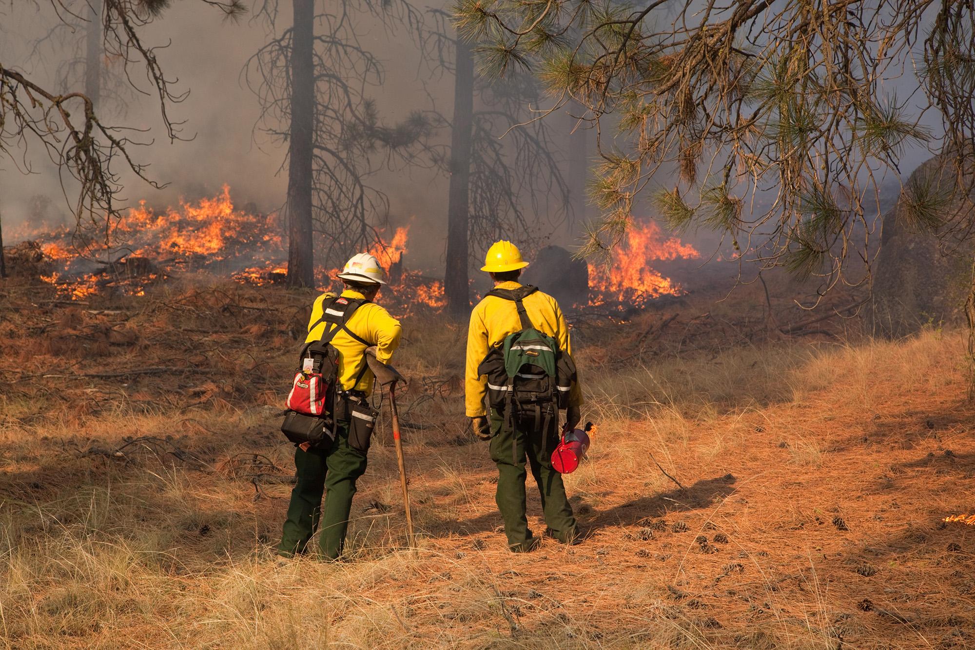 Prescribed fire in ponderosa pine forest in the Sinlahekin Wildlife Area in Okanogan County, Wash.Photo by John Marshall.