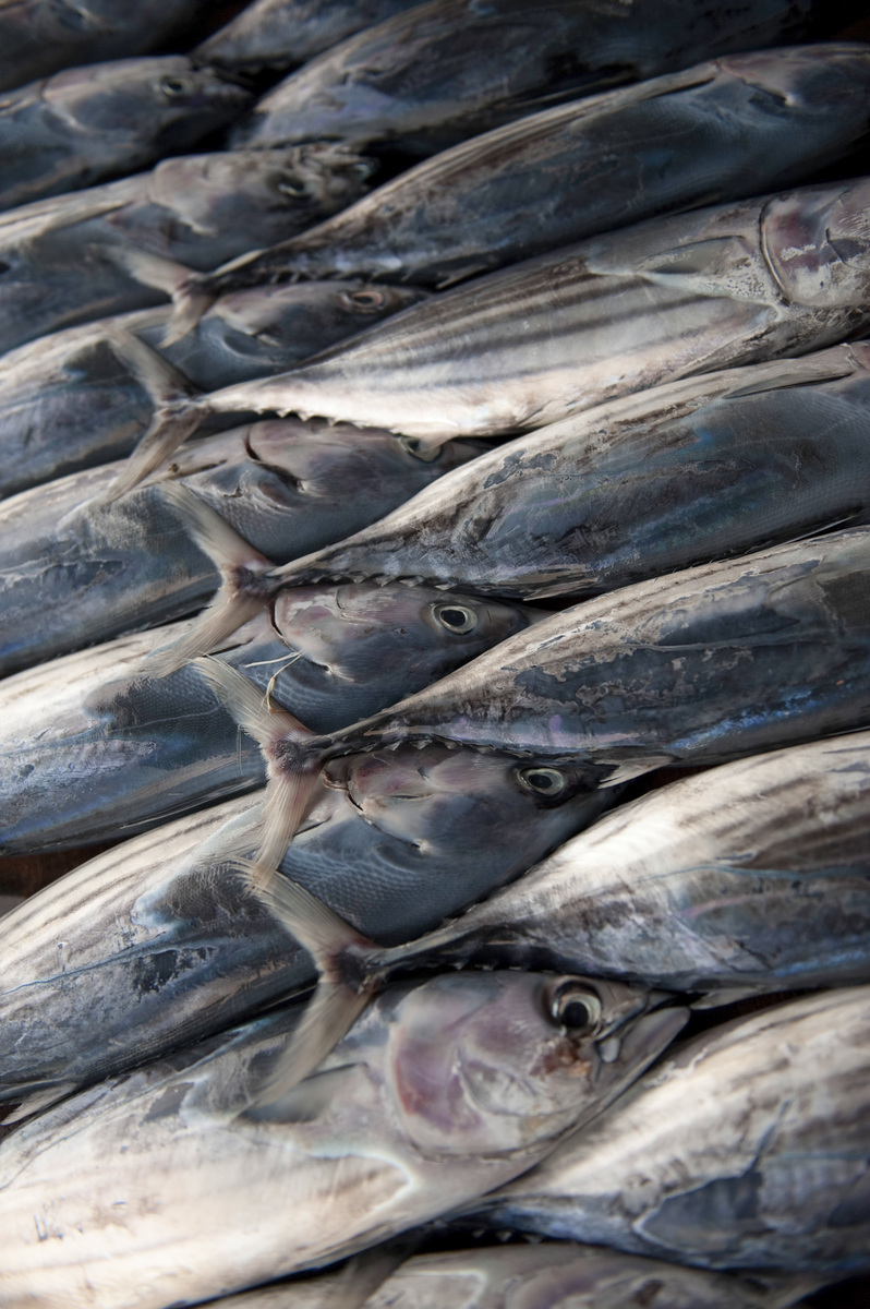 Juvenile skipjack tuna on display at one of the fish market stalls in Kolonia, the capital city of Pohnpei. Photo © Nick Hall