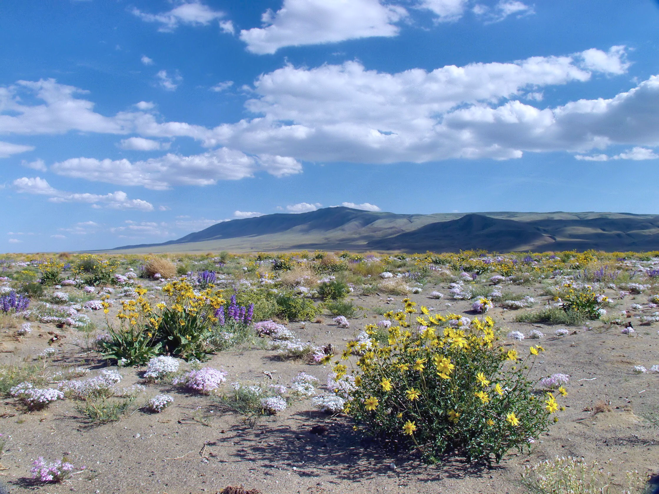The reach and adjacent lands provide habitat for numerous rare and endangered plants and animals, including several new species that were discovered in the 1990s. Photo by Rich Steele