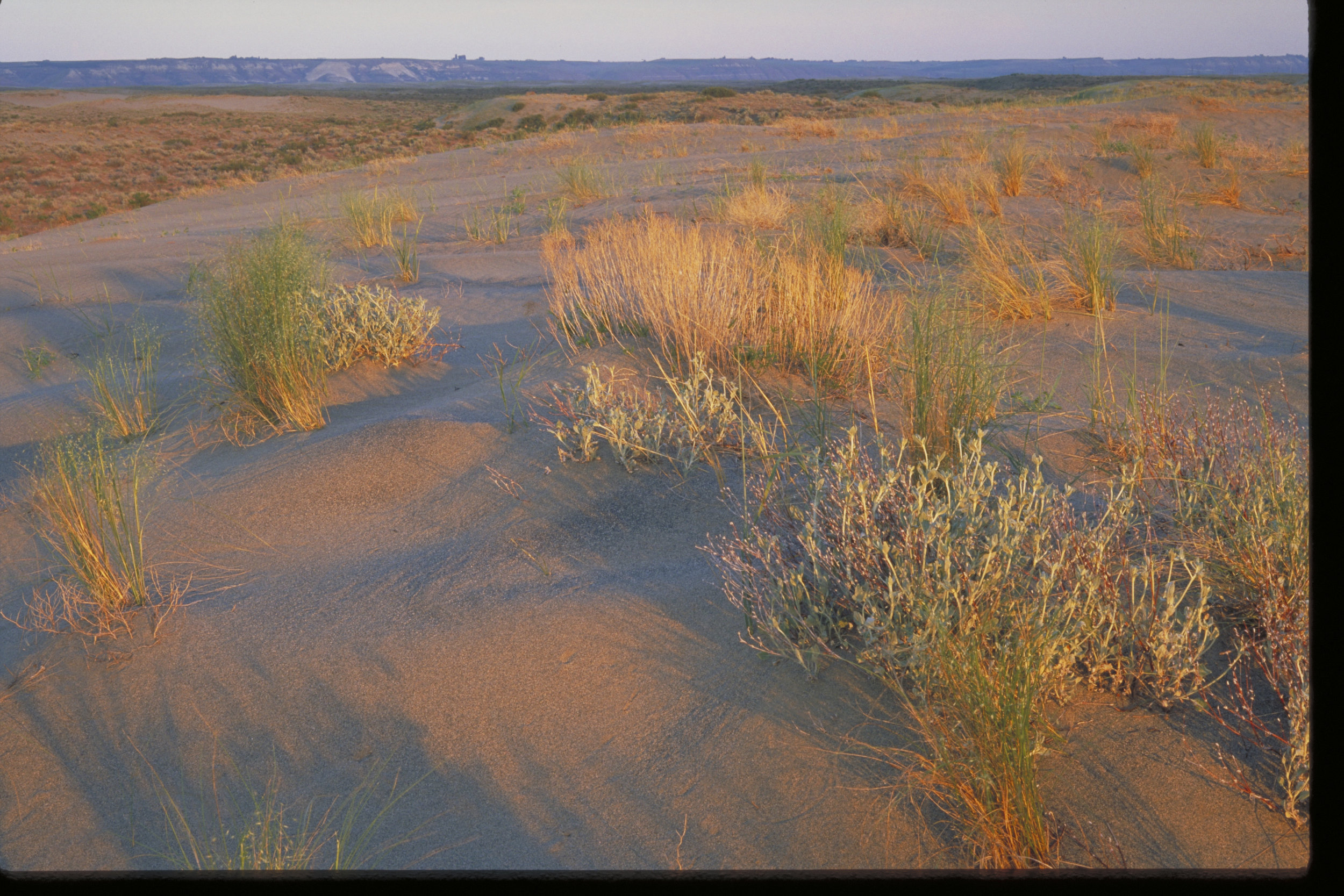 Sand dunes at Hanford. Photo by Keith Lazelle.
