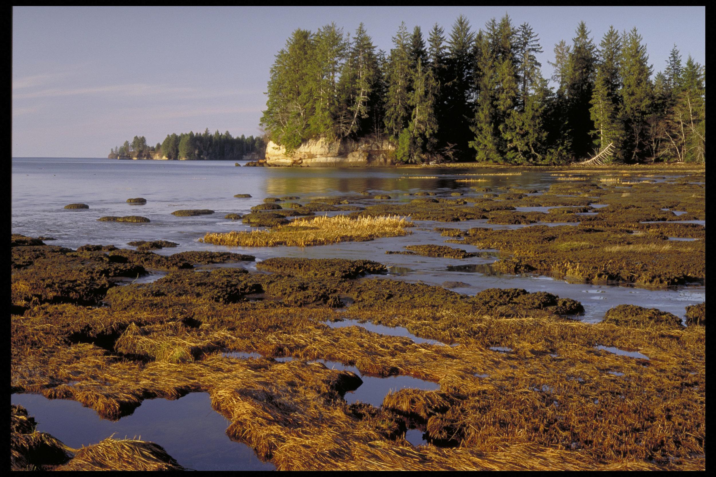 Salt marsh on Willapa Bay.Photo by Keith Lazelle.