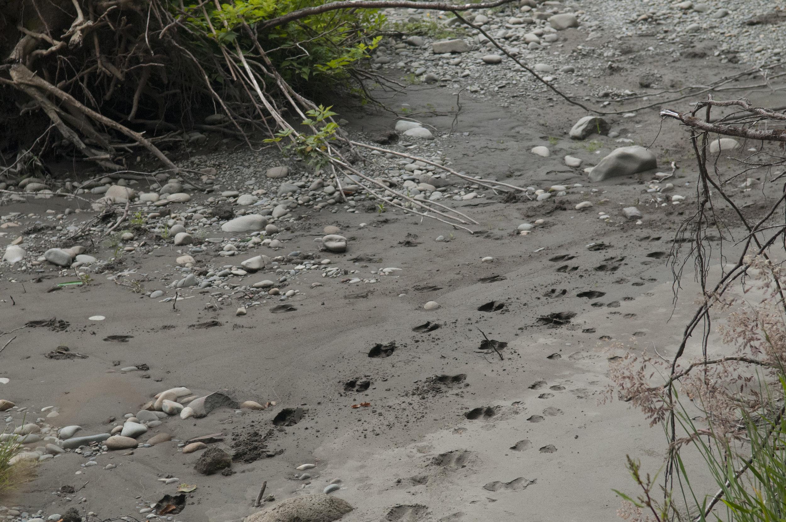 Strange tracks along the river's bank. Photo by Nikolaj Lasbo/TNC