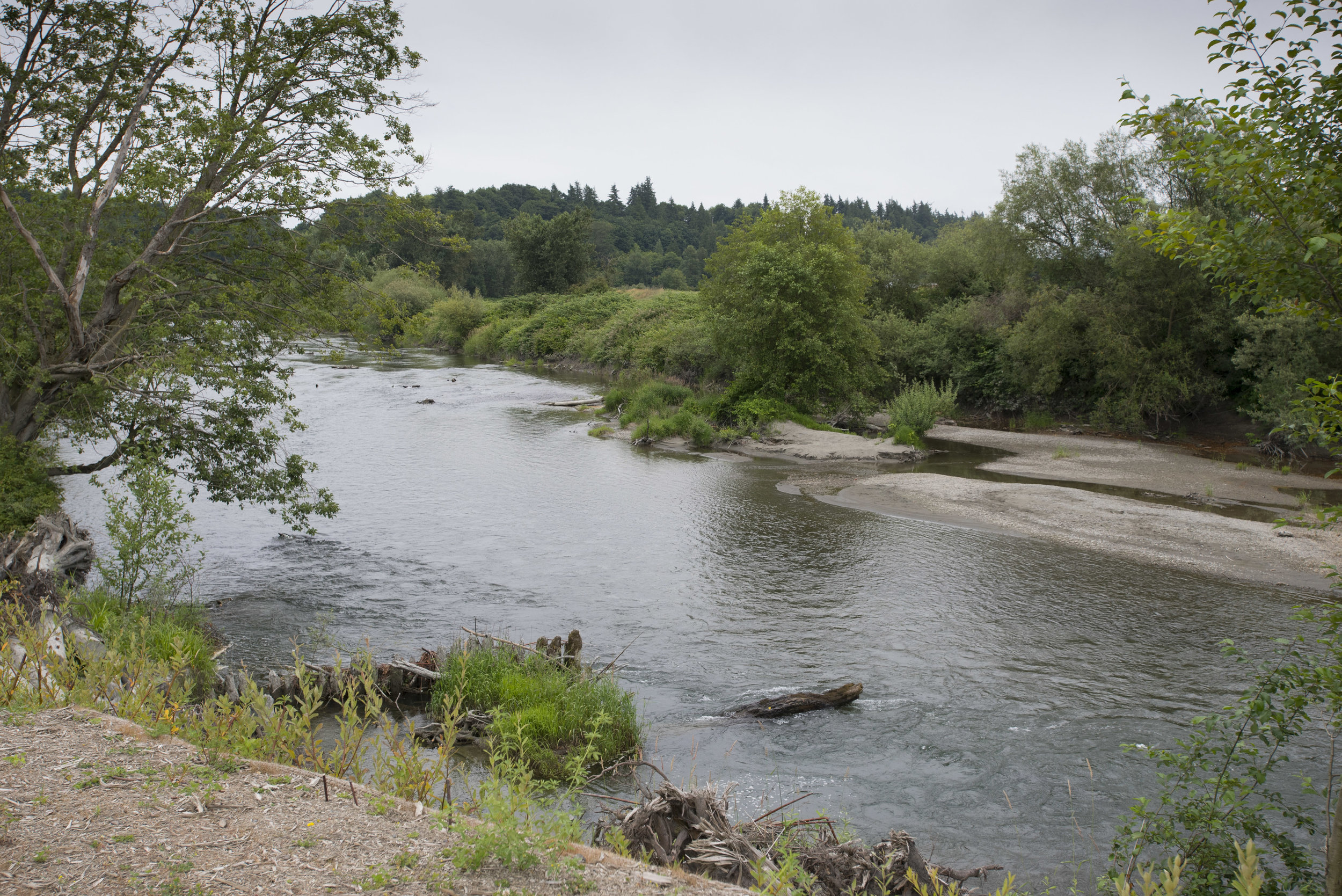 The Stillaguamish River is just 300 yards away from the entrance to the Natural Milk Dairy Farm. Photo by Hannah Letinich.