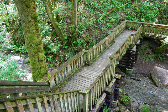 A raised staircase makes way for a small creek below at Dash Point State Park. Photo by  OnceAndFutureLaura via Flickr  (Creative Commons  license )