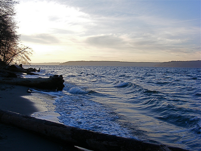 The beach at Dash Point offers a great space for scouting seabirds, spotting shells, or pushing off for a paddle. Photo by  vikisusan via Flickr (Creative Commons  license )