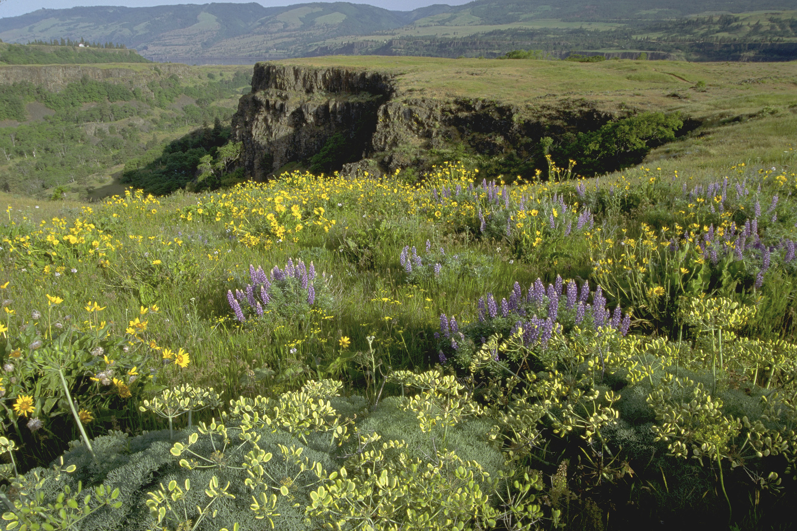 The Conservancy's Tom McCall Preserve at the Columbia River Gorge in Oregon. Photo © Alan D. St. John.