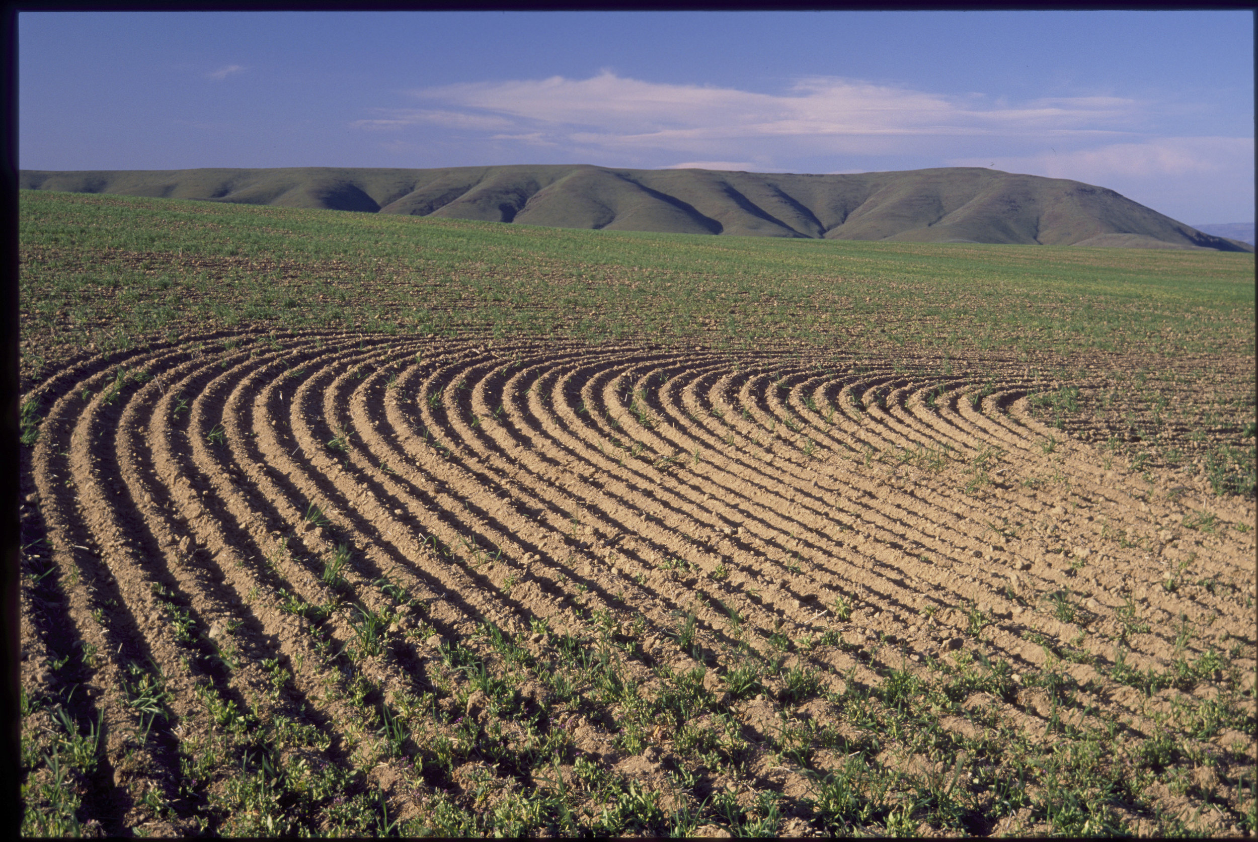 Agriculture in Washington's shrub-steppe. Photo by Keith Lazelle.